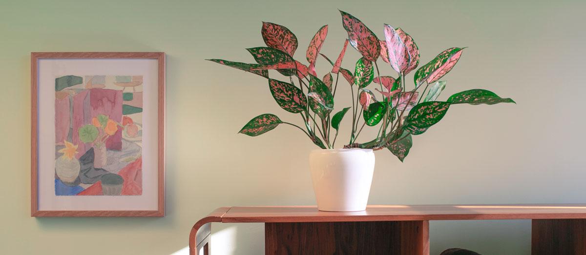 harley-house-osteo-plant
